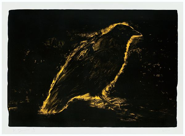 Raven, Suns Night Glow